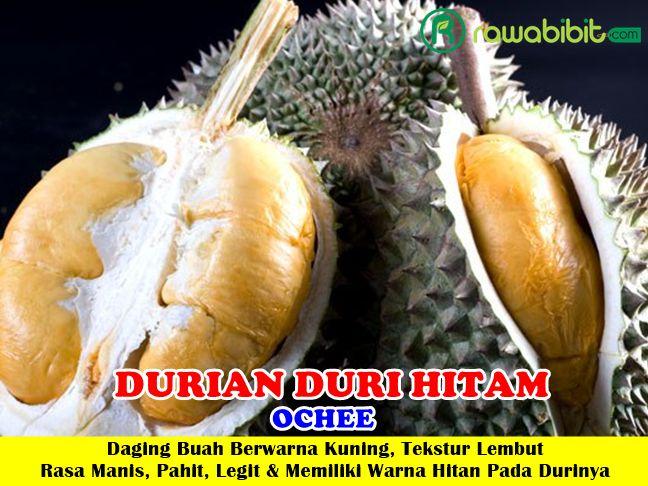 Durian Duri Hitam Unggul