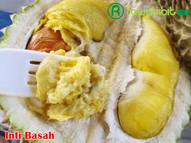 Inti basah durian