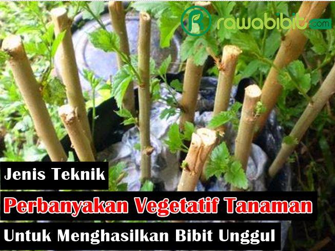 Jenis Perbanyakan vegetatif