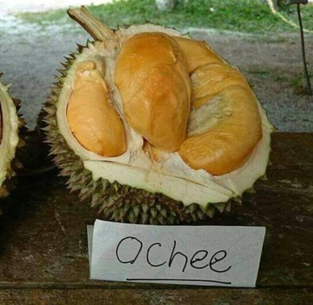 Durian Ochee Unggul