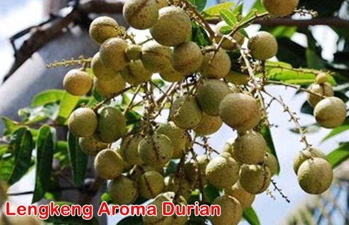 Lengkeng Aroma Durian